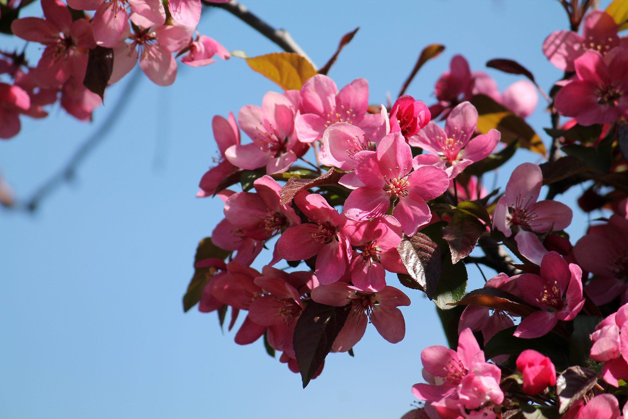 Pian ilmestyy kevään 2020 Ihana Piha!