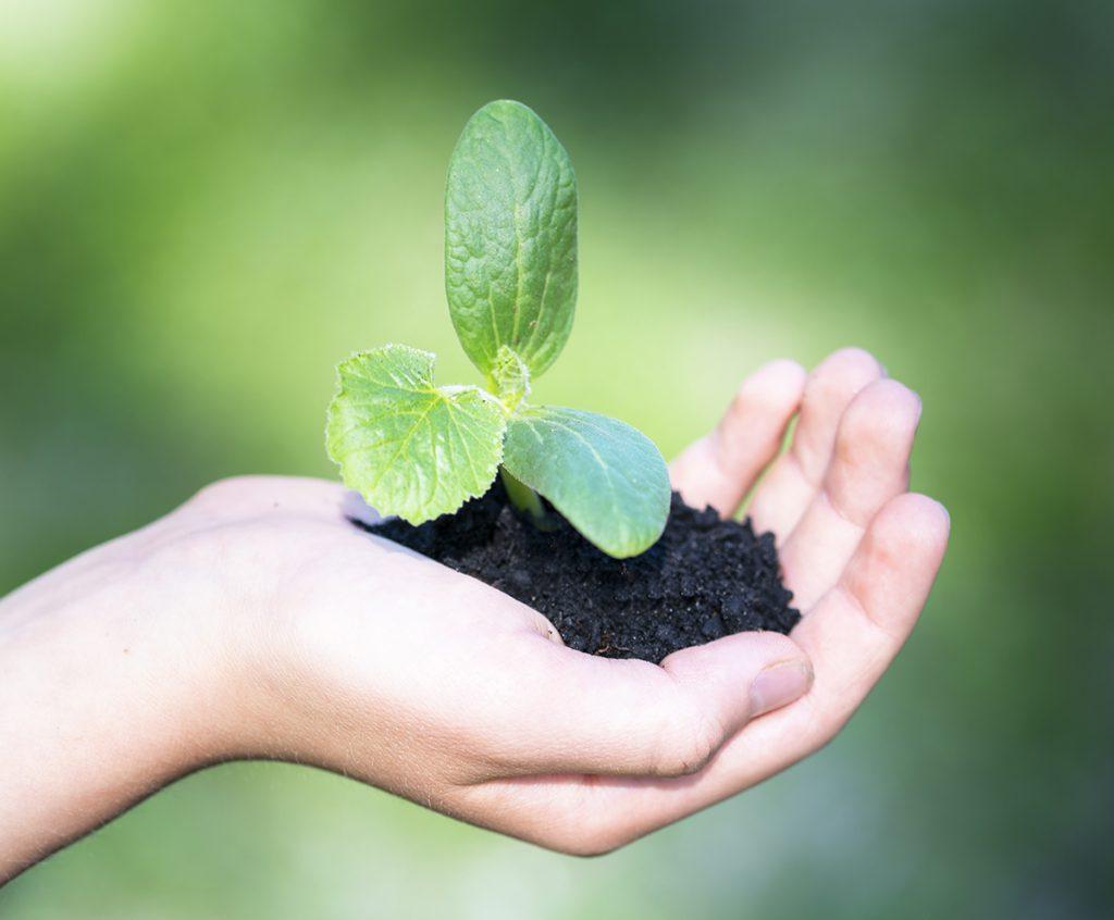Biohiili kasvualustassa