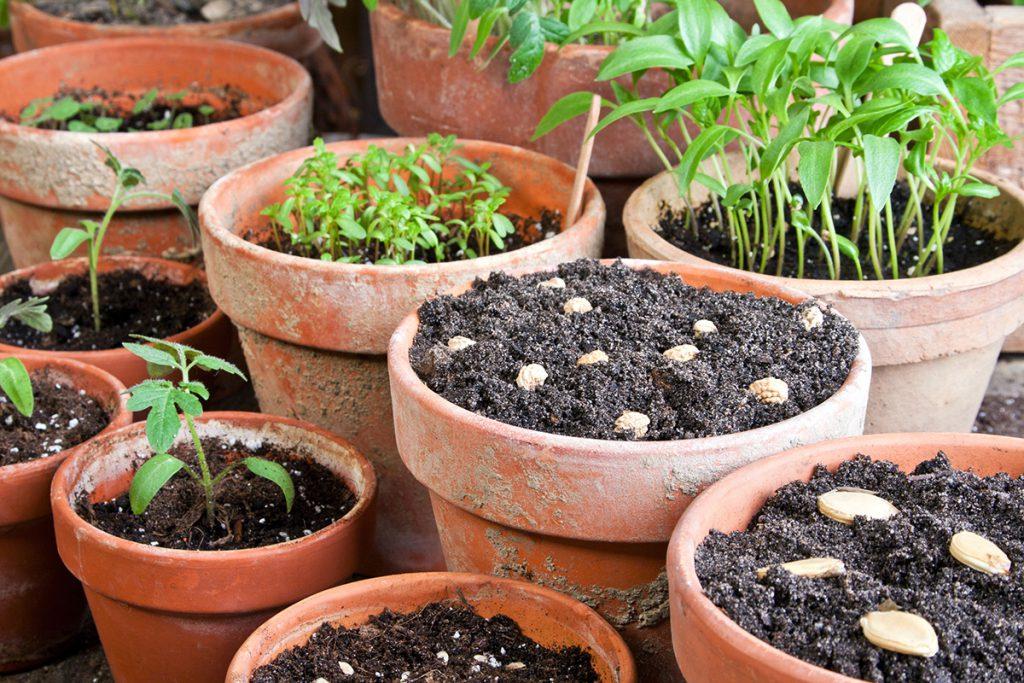 Taimikasvatus jatkaa kasvukautta