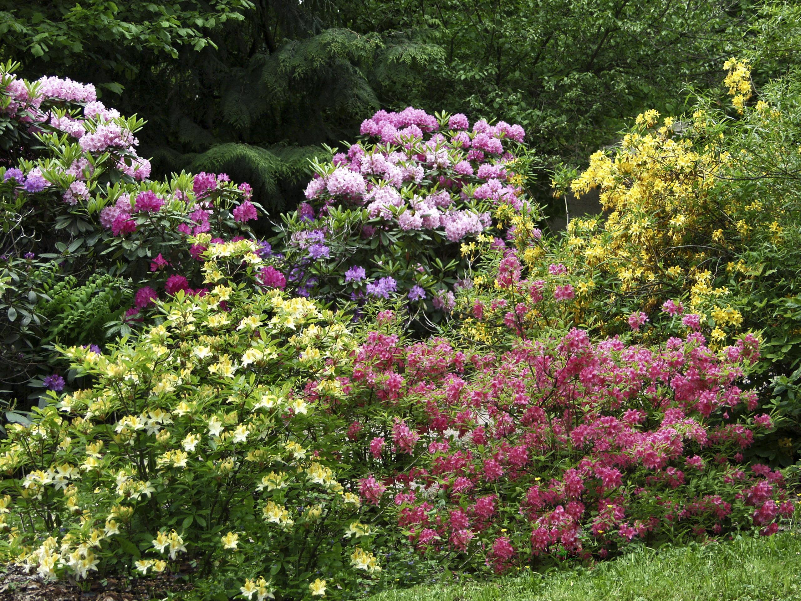 Kukat kevyet kuin perhoset
